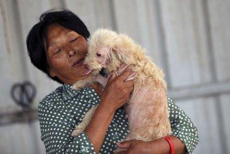 Китаянке за комфорт ее собаки пригрозили штрафом